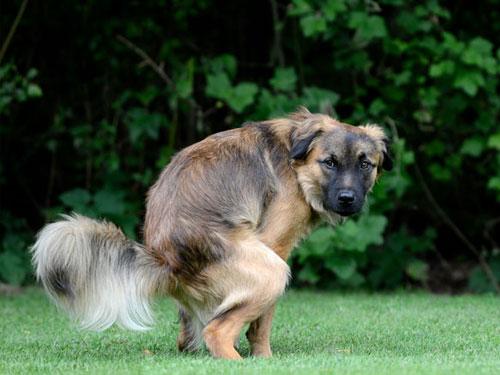 Pets Choice - Insegnare al cane a fare i bisogni in un punto desiderato