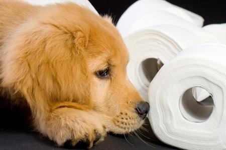 Pets Choice - Coprofagia e rimedi