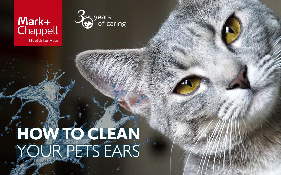 Come pulire le orecchie a cani e gatti ?