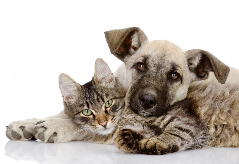 Pets Choice - Dolori articolari? Ecco l'integratore che fa per il vostro cane e gatto