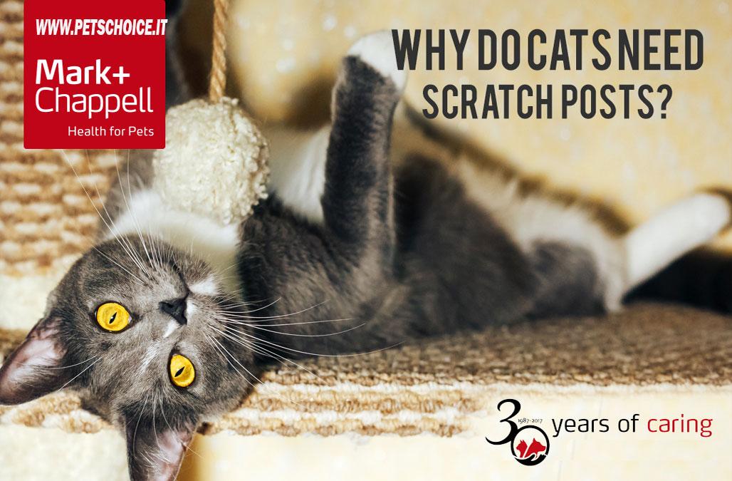 Perchè i gatti hanno bisogno di graffiare?